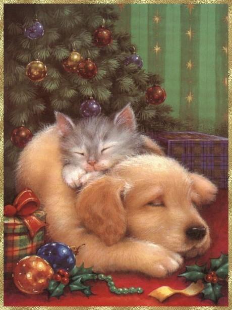 *BONJOUR  C'EST Décembre ... à Bientôt.!!