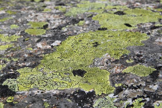 Près de la cabane d'Orny... en vert