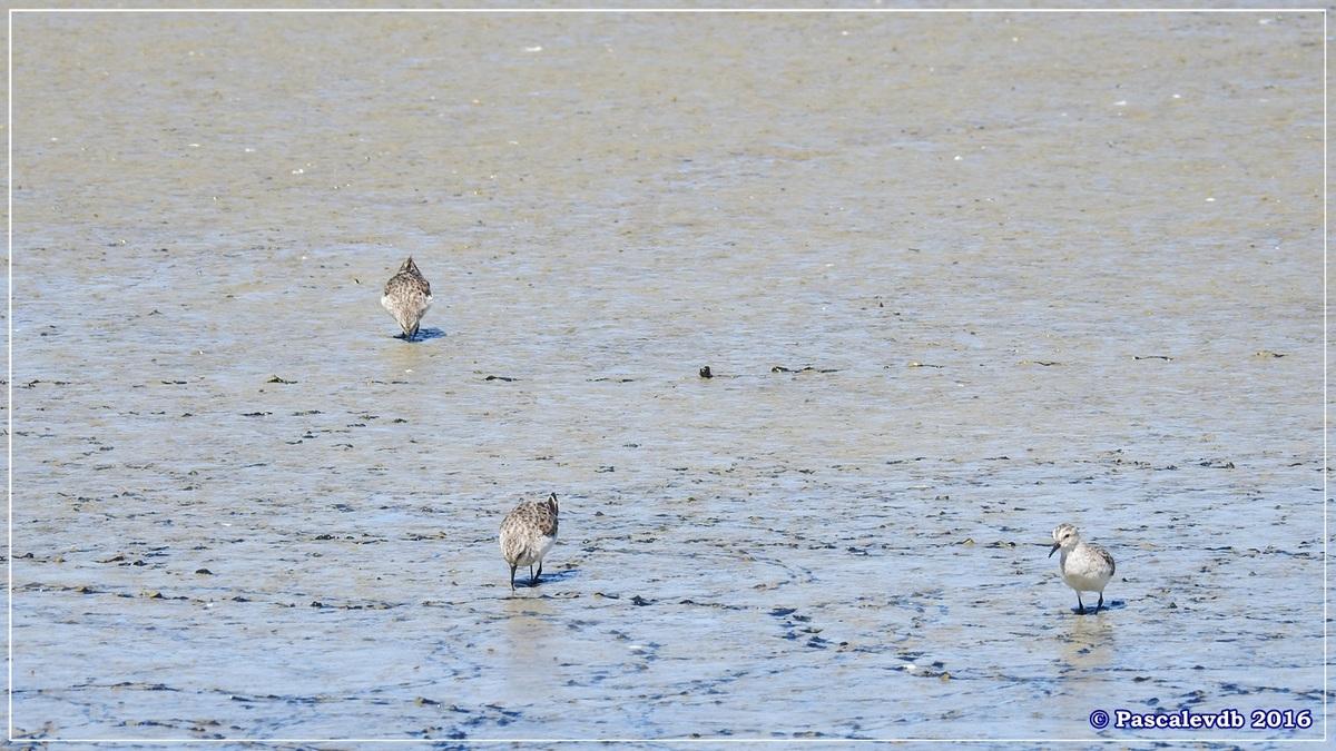 Printemps à la Réserve ornitho du Teich - Avril 2016 - 11/12