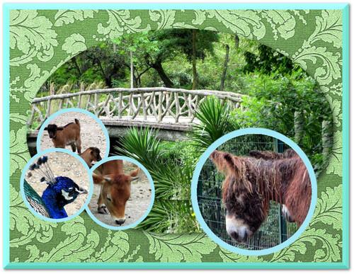 LA ROCHELLE : le parc animalier