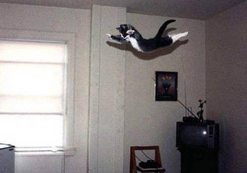 14 - Le chat vole