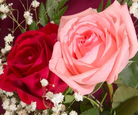 rose-fleur-fanny