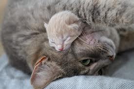 Fais un calin à maman !