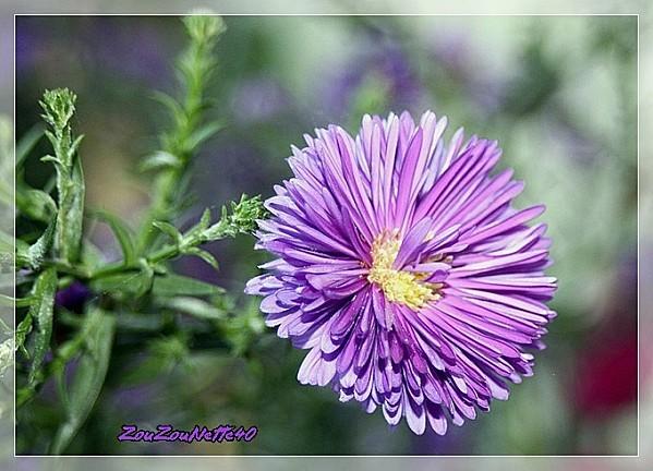 PROMENADE-FLEURIE--09-OCTOBRE-2012-N--6-.jpg