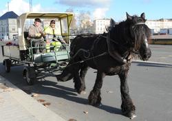 Un cheval dans la ville