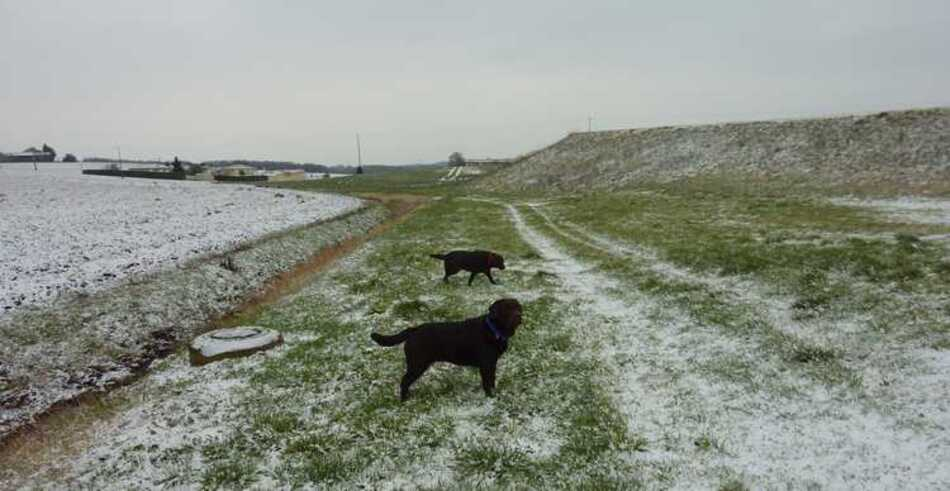 Intermède neigeux en Charente.