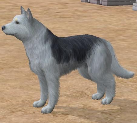 Larans Dogs Actus ): 20ième générations !