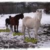2010_19 12 ballade sassenage chevaux (4).jpg