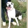 Olympe 1