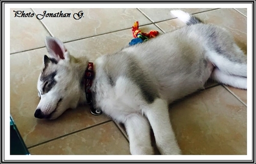 Les p'tits loups dorment (12 septembre 2015)
