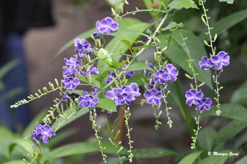 Fleurs du Naturospace de Honfleur