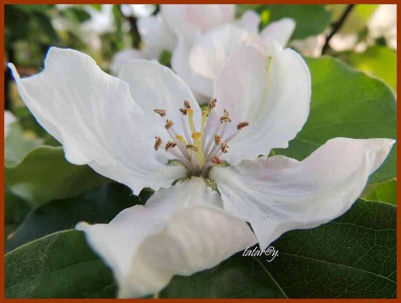 Quelques fleurs du printemps ....