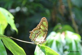 Costa Rica, les minuscules