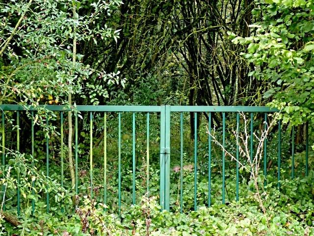 Forêt lorraine 5 Marc de Metz 2011