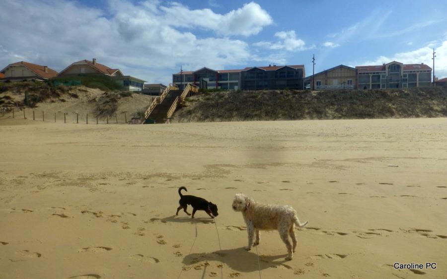 Du vent sur la plage
