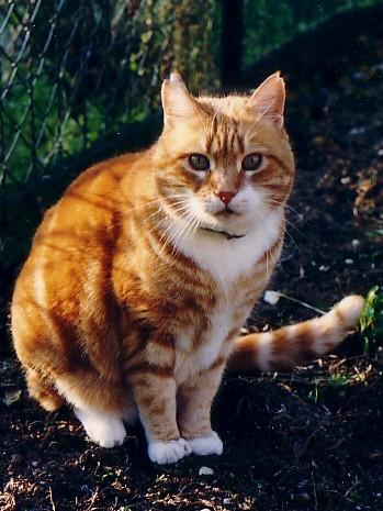 vieux chats patchou