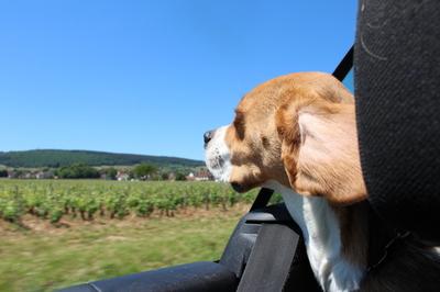 Blog de dyane :Traces de Vie, Sa première sortie en cabriolet...