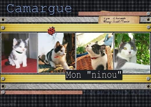 2012-04-13-Camargue-Scrap.jpg