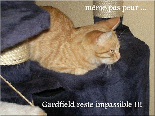 gardfeild-10b.jpg