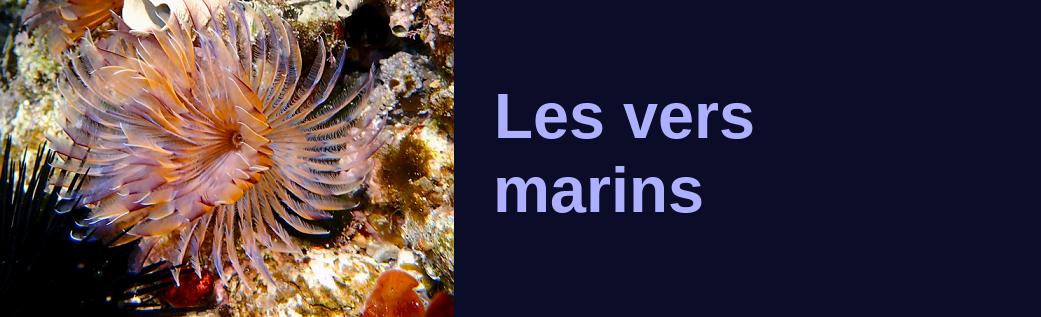 http://ekladata.com/hzhspeAondjWjenPgURPl7Jdttw/banniere-les-vers-marins.png