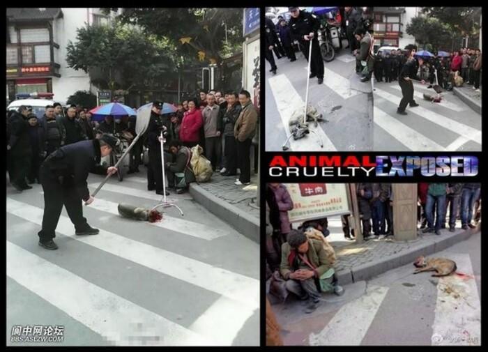 CHINE : Un chien massacré en pleine rue