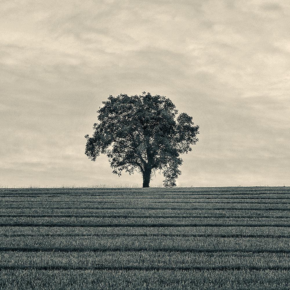 arbre...
