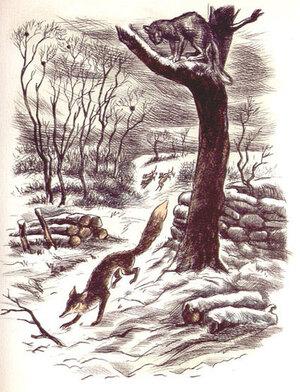 Quand un chat woluwéen boxe et fait fuir un renard trop audacieux