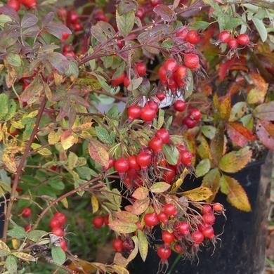 Journées des Plantes d'automne de Chantilly : le monde dans mon jardin chapitre 2...