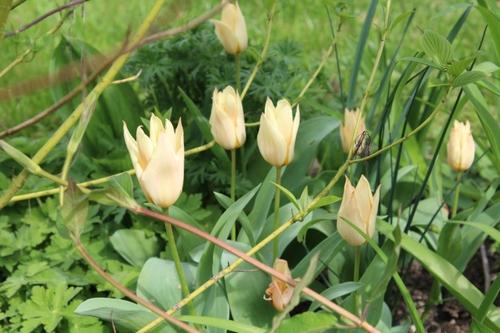Vague de fleurs en ce début d'avril