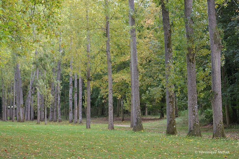 Rambouillet : La forêt domaniale