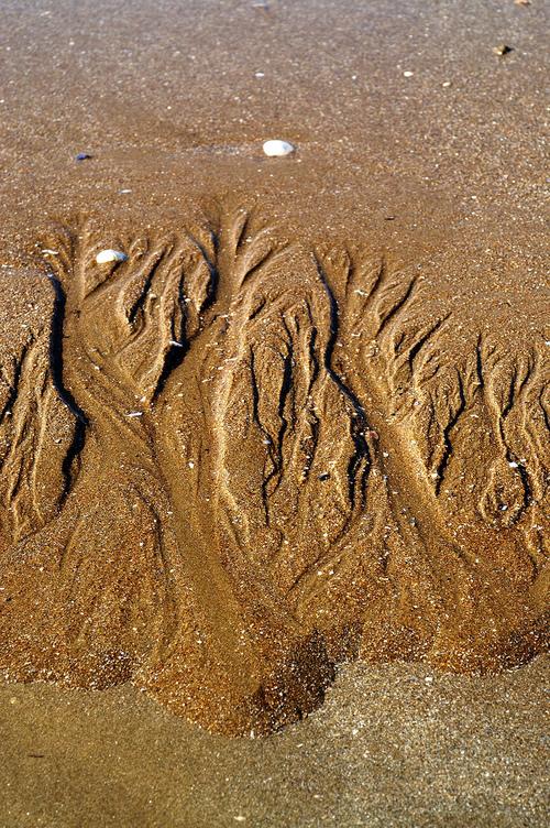 Lorsque la vague se fait artiste...Arbres de sable...Courbes artistiques...