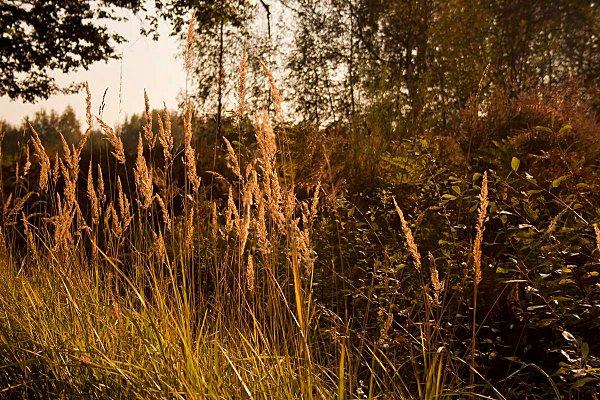 esquisse d'automne 3 bis
