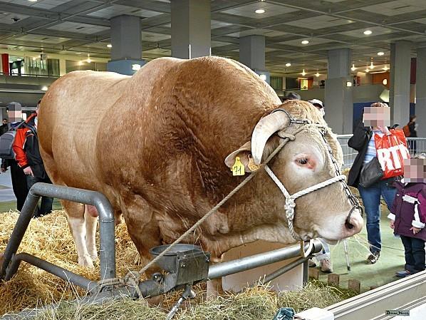 Vache race blonde d 39 aquitaine salon de l 39 agriculture for Vache salon de l agriculture