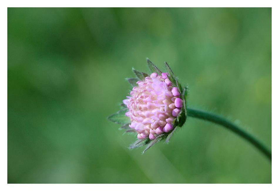 A fleur des Champs