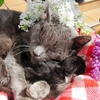 chatons-autres-animaux-autres-chats-sarreinsming-france-6072961689-944929.jpg