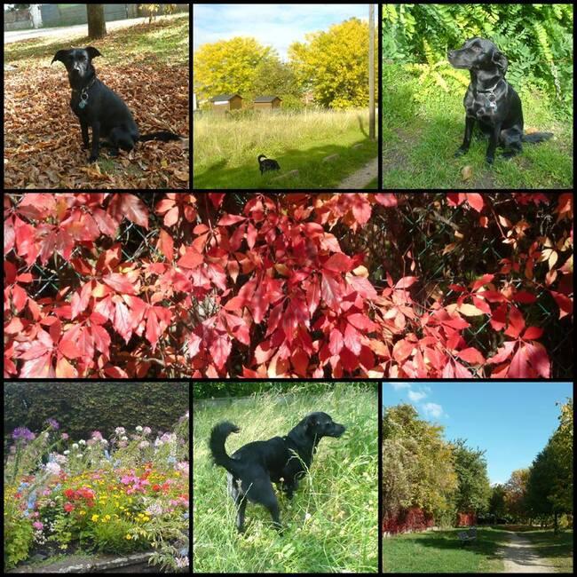 Promenade avec Lady aux couleurs d'automne