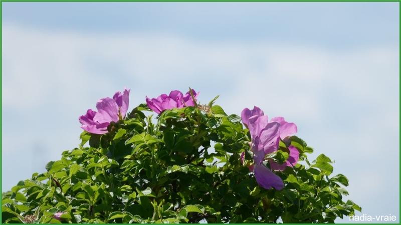 Paysages et fleurs du marais.