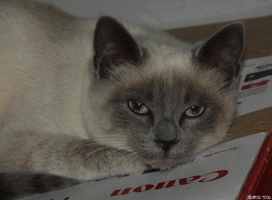 Le chat gris...!!