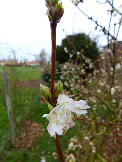 mes 5 floraisons de janvier 2014