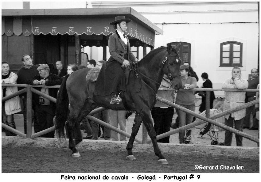 Feira nacional do cavalo - Golegã.