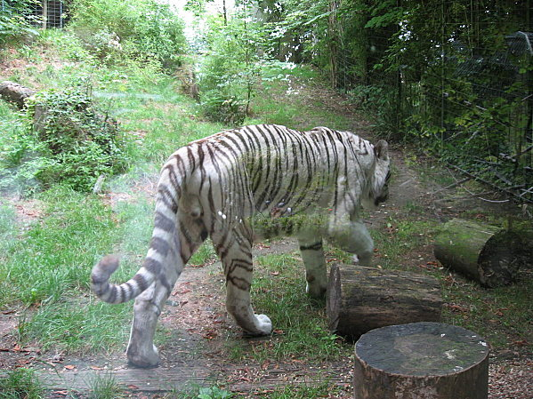 robe;Zoo de Beauval 27 juillet 2009 037