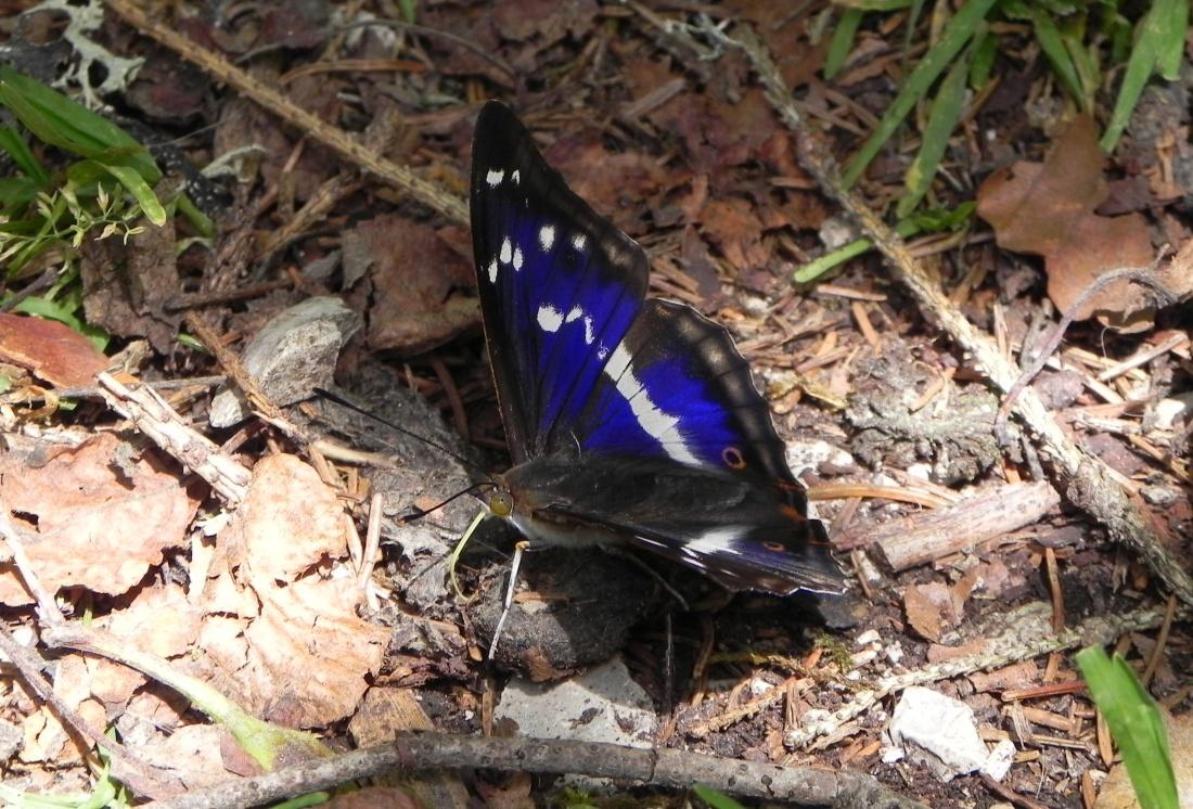 Mon papillon du jour !