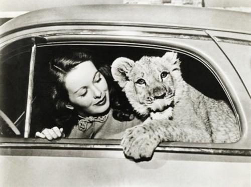L'automobile et les stars en Amérique - honneur aux dames