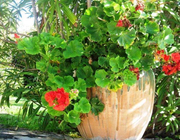 vues-fleurs-chez-jean-louis-141110-024.jpg