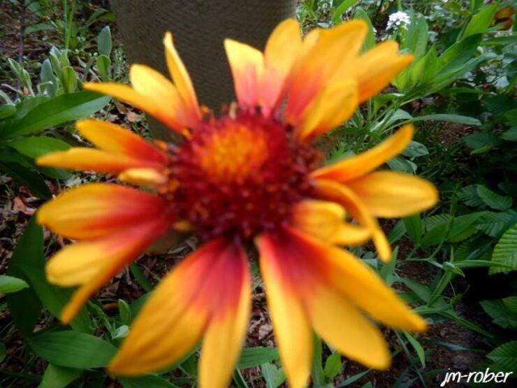 Quelques fleurs du jardin sous le soleil