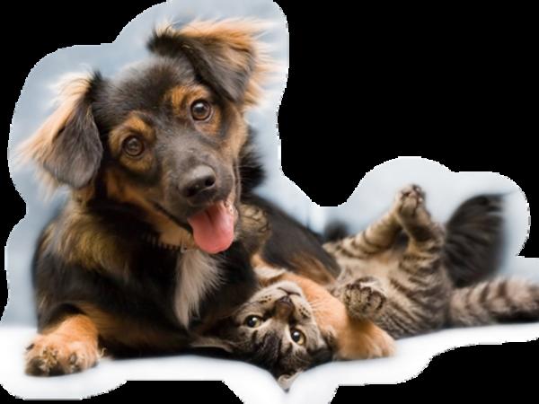 Chats et chiens / 2