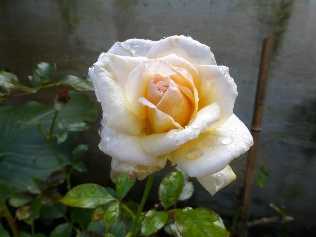 Bon week-end avec les fleurs du petit jardin de ma fille.