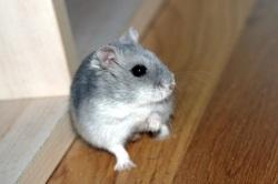 Sorties hamster