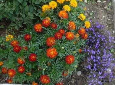 Fleurs d'automne (41)