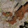 Granit curieusement croûté